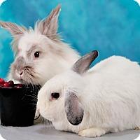 Adopt A Pet :: Tilda - Marietta, GA