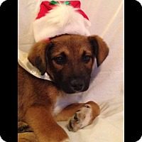 Adopt A Pet :: Nicholas - Albemarle, NC