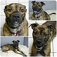 Adopt A Pet :: Rocket - Forked River, NJ