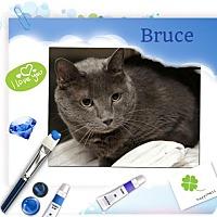 Adopt A Pet :: Bruze - Harrisburg, NC