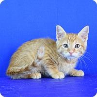 Adopt A Pet :: Chance - Carencro, LA