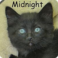 Adopt A Pet :: Midnight - Warren, PA