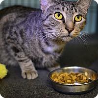 Adopt A Pet :: Birdie - Tomball, TX