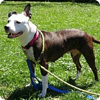 Adopt A Pet :: Rayna - Canastota, NY