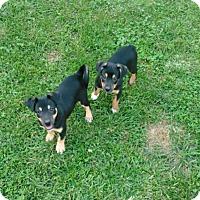 Adopt A Pet :: 3 boys & 6 girls - Denver, IN