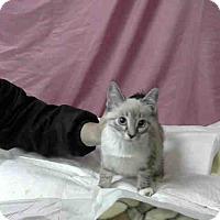 Adopt A Pet :: URGENT on 10/22 at DEVORE - San Bernardino, CA