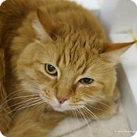 Adopt A Pet :: Banzai - Tucson, AZ