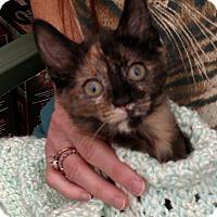 Adopt A Pet :: Gizmo - Warren, OH