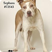 Adopt A Pet :: Sephora - Baton Rouge, LA