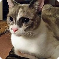 Adopt A Pet :: Chloe - Battle Ground, WA