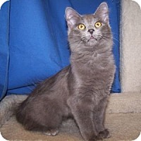 Adopt A Pet :: K-Gloria1-Galena - Colorado Springs, CO
