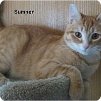 Adopt A Pet :: Sumner - Portland, OR
