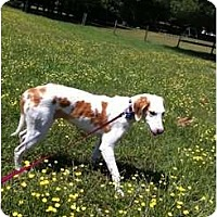 Adopt A Pet :: Hope - Richmond, VA