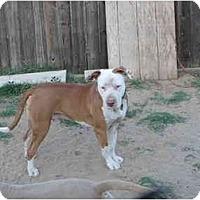 Adopt A Pet :: Charlie - Lodi, CA