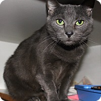Adopt A Pet :: Smokey - Middletown, CT
