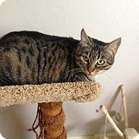 Adopt A Pet :: Gabriela - San Ramon, CA