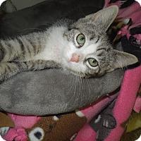 Adopt A Pet :: Jelly - Medina, OH