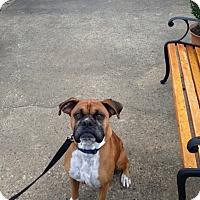 Adopt A Pet :: Paxton - Brentwood, TN