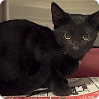 Adopt A Pet :: Nero - Chattanooga, TN