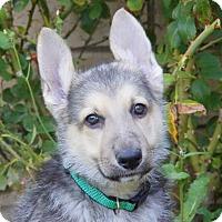 Adopt A Pet :: Bruce von Geneva - Thousand Oaks, CA
