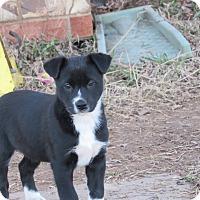 Adopt A Pet :: Trina - Broken Arrow, OK