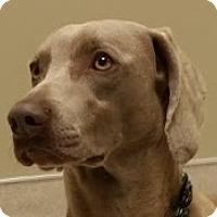 Adopt A Pet :: Wilson - Birmingham, AL