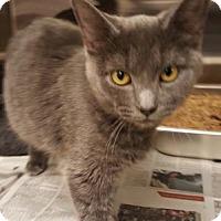Adopt A Pet :: Avis- - Arlington, VA