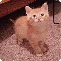 Adopt A Pet :: Johnny Cash - Monterey, VA