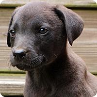 Adopt A Pet :: Gwen - Glastonbury, CT