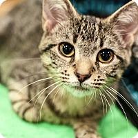 Adopt A Pet :: Mary Ann - Gainesville, FL