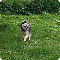 Adopt A Pet :: Ranger - Stuart, VA