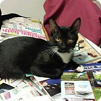 Adopt A Pet :: Widget (Christmas Special) - Media, PA
