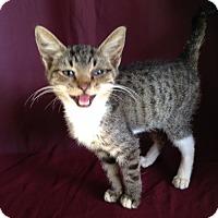 Adopt A Pet :: Belinda and Brody - Thomaston, GA