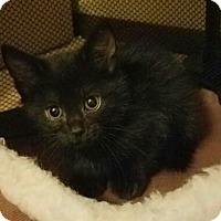Adopt A Pet :: Mars - Aurora, CO