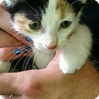 Adopt A Pet :: Lilly - Saginaw, MI
