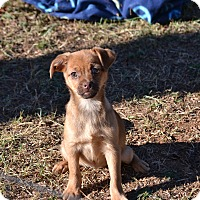 Adopt A Pet :: Reese's - Pikeville, MD