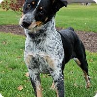 Adopt A Pet :: Simba - Michigan City, IN