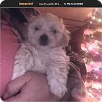Adopt A Pet :: Lilith - Nashua, NH