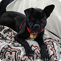 Adopt A Pet :: Frodo - Salt Lake City, UT