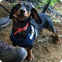 Adopt A Pet :: HUMPHREYS - Portland, OR
