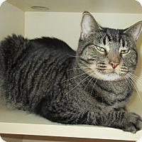 Adopt A Pet :: Savin - Elizabeth City, NC