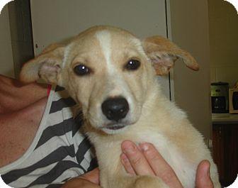 Margo | Adopted Puppy ...