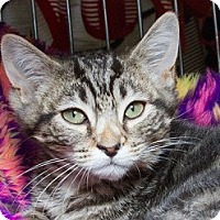 Adopt A Pet :: Ferris M - Sacramento, CA