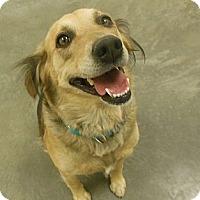 Adopt A Pet :: Suzie - Phoenix, AZ