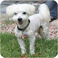 Adopt A Pet :: Guy - Phoenix, AZ