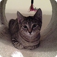 Adopt A Pet :: Amy - Raritan, NJ