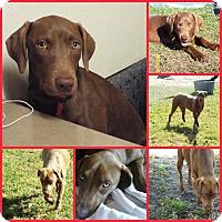 Adopt A Pet :: ABBY - Davenport, FL