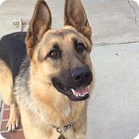 Adopt A Pet :: Stanley - Bellflower, CA