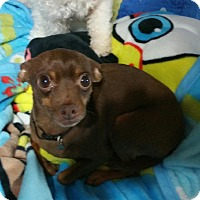 Adopt A Pet :: Dobby - Richmond, VA