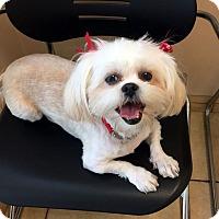 Adopt A Pet :: YAZMIN - Los Angeles, CA